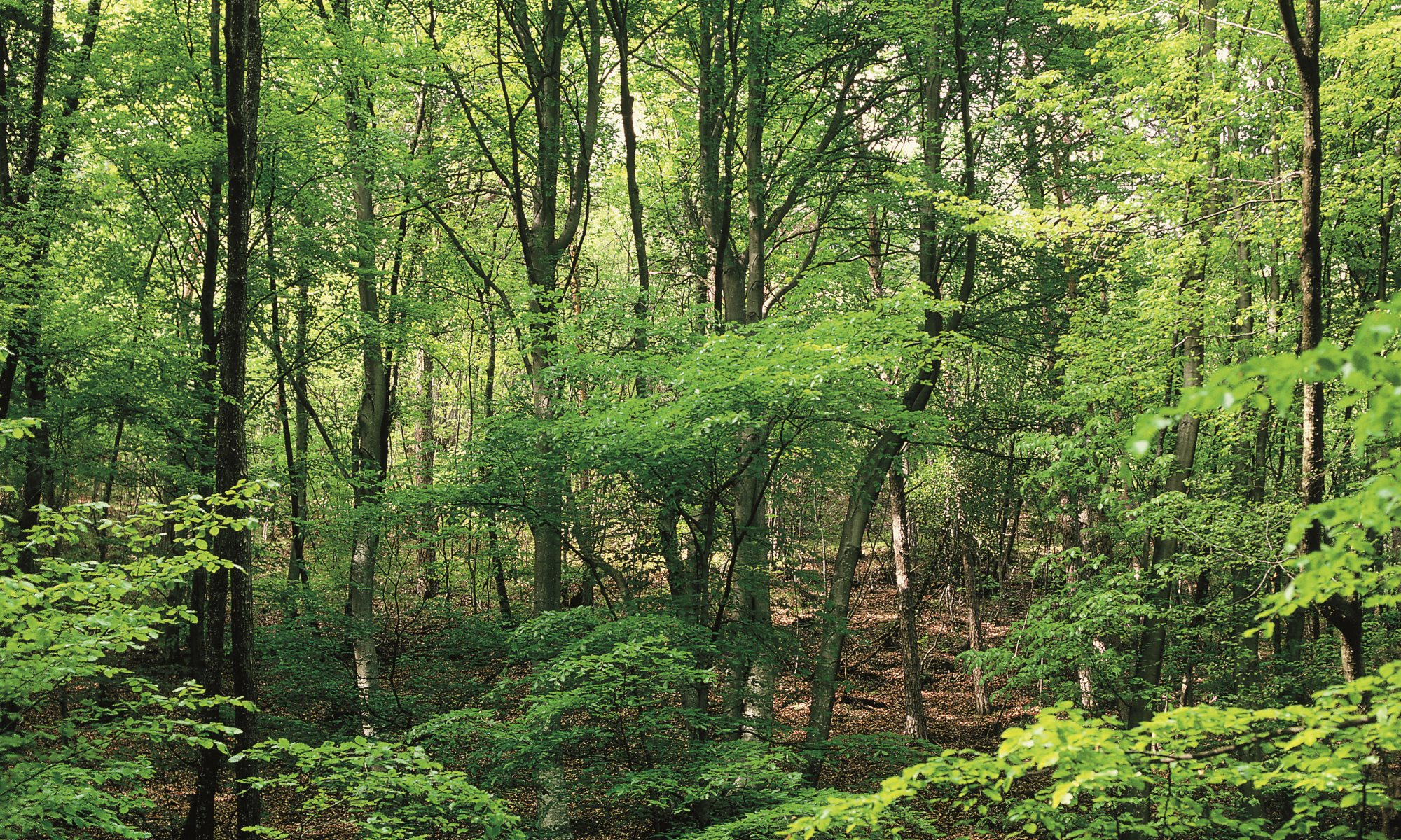 Umweltgruppe Kaltern